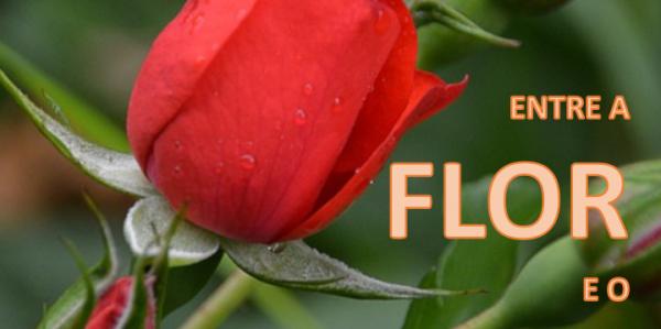 Entre a flor e o espinho